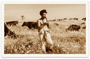 רועה צאן ליד הכינרת
